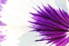 Flower petal Stock Images