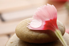 Flower petal resting on rounded pebbles. Royalty Free Stock Photos