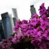 Red flower petal. Flower petal on singapore street Royalty Free Stock Images