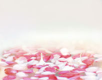 Flower petal on water background Stock Images