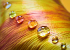 Flower petal with water drops Stock Photography