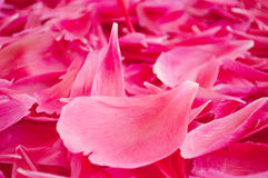 Flower petals. Pink background from flower petals Royalty Free Stock Photography