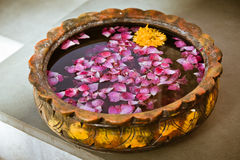 Flower petals. Colorful flower petals floating on a bowl filled with water Stock Image