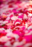 Flower petals Royalty Free Stock Photos