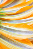 Flower petals background Royalty Free Stock Image