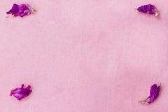 Flower petals background Stock Image