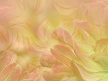 Flower petals on a  blurred pink-yellow colorful background. floral composition.  Stock Images