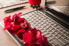 FLOWER PETALS ON A COMPUTER stock photography