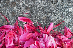 Flower petals on concrete ground Stock Image