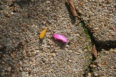 Flower petals fallen on rock floor royalty free stock photos