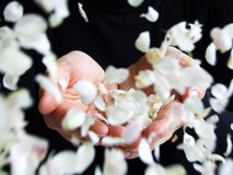 Flower petals falling into hands Stock Photo