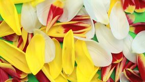 Flower petals flying stock footage