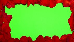 Flower Petals on Green Screen. You can replace the green screen on any of your image stock video footage