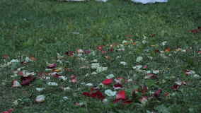 Flower petals lie in the grass stock video footage