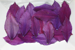Flower petals Royalty Free Stock Photography