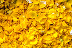 Flower petals Royalty Free Stock Images
