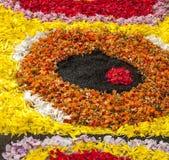 Flower petals Stock Image
