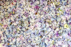 Flower petals Royalty Free Stock Image
