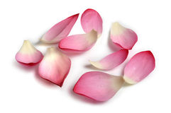 Flower petals Stock Images