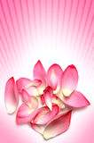 Flower petals Stock Photos