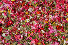 Flower petals scattered. On the floor Royalty Free Stock Image