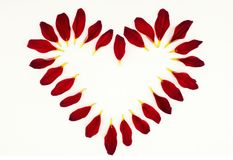 Flower petals in the shape of heart. On white for the romantic atmosphere Stock Photo
