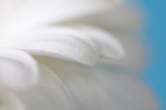 Flower petals. Soft focus. Stock Photo