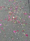 Flower petals on the street during festival. Colourful flower petals on the street during celebration Royalty Free Stock Images