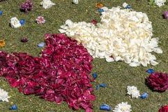 Flower petals Royalty Free Stock Photo