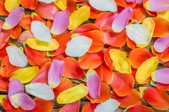 Flower petals of a tulip Royalty Free Stock Image