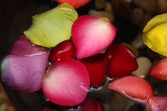 Flower petals in water royalty free stock photography