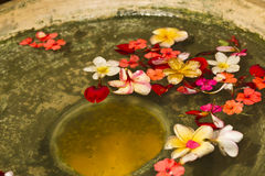 Flower Petals in Water Bowl Stock Images