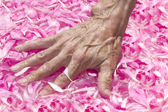 Flower petals water  hand Royalty Free Stock Photo
