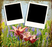 Flower & Photo Background Royalty Free Stock Photo