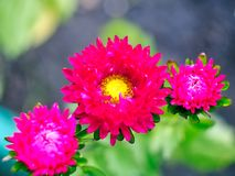 Flower. Photo of  flower on blurred background Royalty Free Stock Image