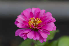 Flower. Photo of plant in the garden Stock Photography