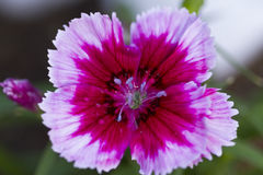 Flower. Photo of plant in the garden Stock Images