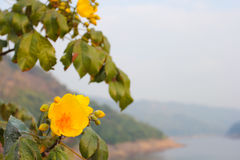 Flower. This photo are Silk-cotton tree taken at Nakronnayok Thailand Stock Image