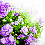 Flower, photo in vintage style Royalty Free Stock Photo