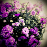 Flower, photo in vintage style Stock Images