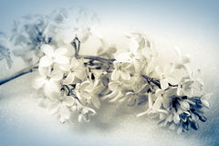 Flower, photo in vintage style Royalty Free Stock Photos