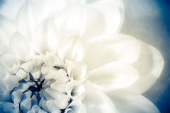 Flower, photo in vintage style Royalty Free Stock Image