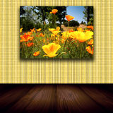 Flower Photo On Wall. Photograph of bright poppy flowers hanging on wallpapered wall of room with wood floor Stock Images