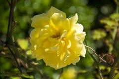 Flower 78 Royalty Free Stock Photo