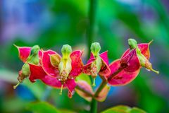 Flower photography close-up. royalty free stock photo