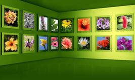 Flower photography gallery exhibition hall concept Royalty Free Stock Photo
