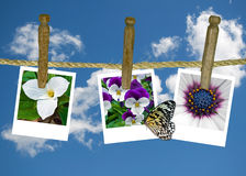Flower photos on clothesline stock illustration
