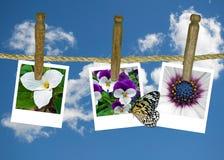 Flower photos on clothesline Stock Photos