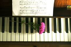 Flower on the piano. Aster Flower on the piano Royalty Free Stock Image