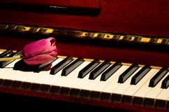 Flower and piano. All of music and love Stock Image